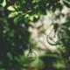 Glühbirne fällt vom Baum